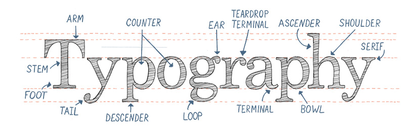 Terminology for Type and Lettering - Letter Anatomy